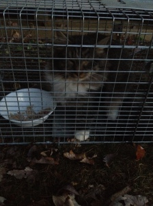 "Ginger - formerly known as ""The Ugly One"" - was spayed and given a rabies shot on 11/21. She is sponsored by Pat and Mary."
